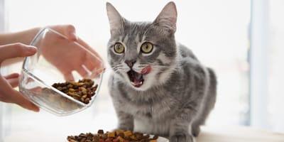 Naturalna karma dla kota: wybór dla kotów od pokoleń