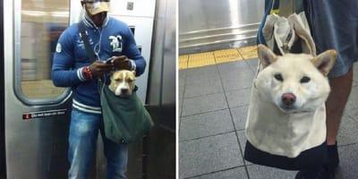 perros bolsos metro nueva york