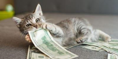 gattino-gioca-con-delle-banconote