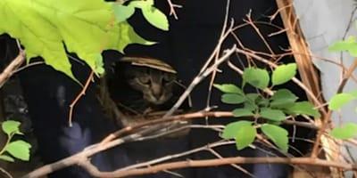 Kätzchen im Container gefunden