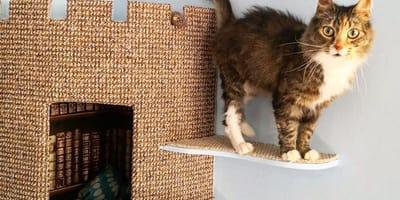 cat perching