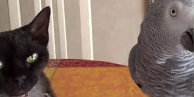 Katze und Papagei als Film-Stars