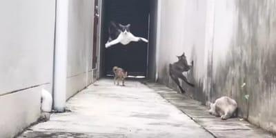 Katzen-Akrobatik