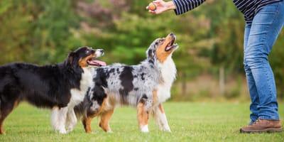 Jak wyszkolić psa samemu? Poznaj podstawowe zasady!