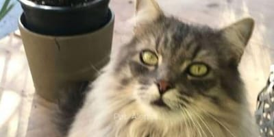 Woman picks up her cat from sitter: She instantly knows something is very wrong
