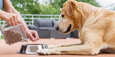 Karma bezzbożowa dla psa - czy faktycznie jest najlepsza?