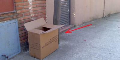 cachorros encontrados caja carton montefrio granada