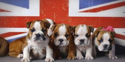 Pawesome: Die schönsten Hundenamen auf Englisch und ihre Bedeutung
