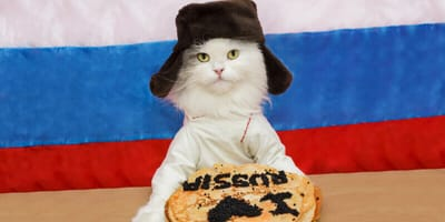 Katze vor Russland-Flagge mit Kuchen