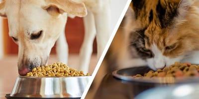 Hund und Katze fressen aus Napf
