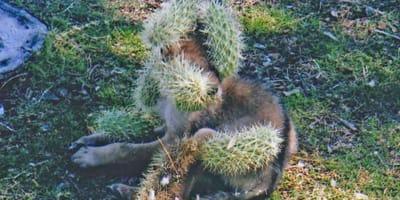 cactus on animal