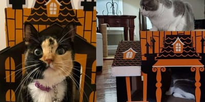 cat in haunted house