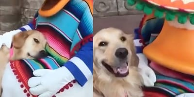 dog with Disney character