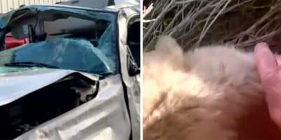 Ofiara  wypadku samochodowego budzi się w szpitalu i mówi tylko o jednym