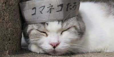 Japanische Katzennamen und ihre Bedeutung