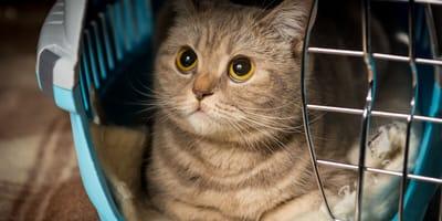 gato dentro de un transportin