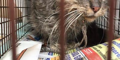 Katze mit Angelhaken im Maul