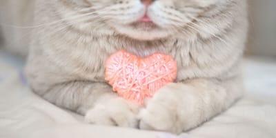 Kotek z sercem.