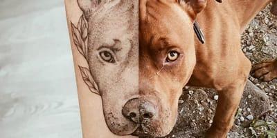 Die schönsten Pitbull-Tattoos