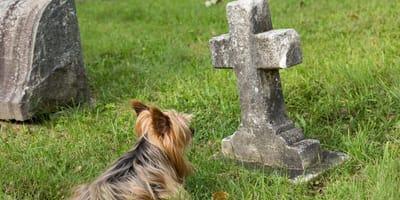 Ohlsdorf will Haustiere im Grab zulassen