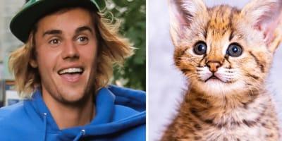Justin Bieber: Riesen-Ärger wegen seiner neuen Kätzchen