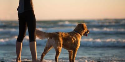 Kobieta i pies na plaży.