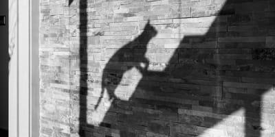 Schatten von Katze auf Treppe