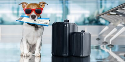 How will Brexit affect pet travel?
