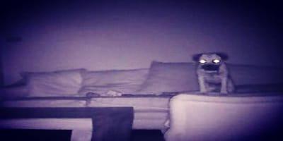 perro haciendo cosas extrañas soledad camara oculta