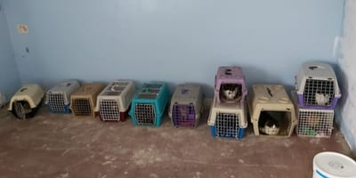Officers found 15 cats living in horrific conditions