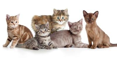 Knuddelige Kätzchen: Ganz Instagram ist verrückt nach diesen 10 Katzenrassen!
