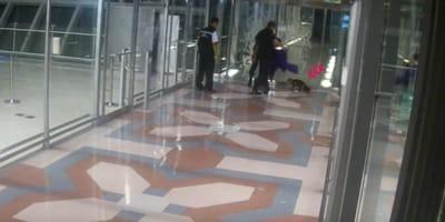 gato escapa aeropuerto pasa perdido cuatro dias terminal aeropuerto Tailandia