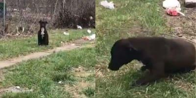 cane marrone sull'erba