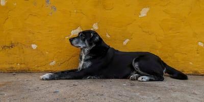 Einen Straßenhund aus Portugal adoptieren - Das müssen Sie wissen