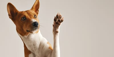 How to remove a tick from your dog's paw