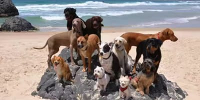Watch: cute gang of cats and dogs make hit song 'Happy' sound even better