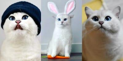 Cody el gato blanco