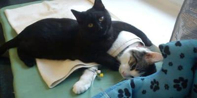 Kot_Rademenes_opiekuje_sie_zwierzakami