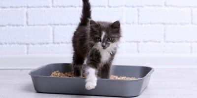 Probando arena para gatos: ¿Cuál es la mejor?