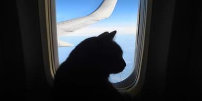 Ein Flug mit Katzen