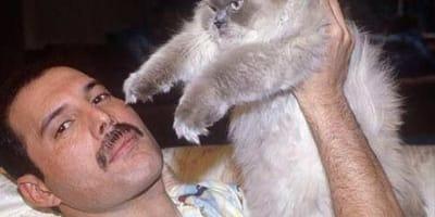 freddie mercury e gatti