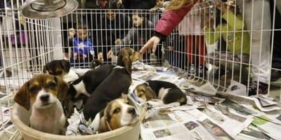 perro enjaulado en Barcelona