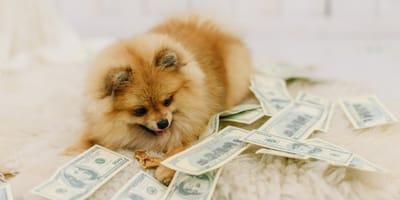 cane-su-tappeto-con-delle-banconote