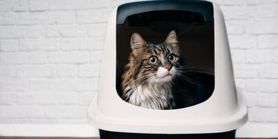 Biegunka u kota – możliwe przyczyny i leczenie