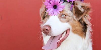 Come cambia il comportamento del cane dopo la sterilizzazione?