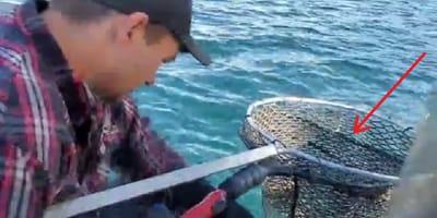 pescador rescata lince en montana