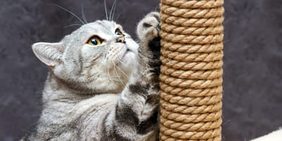 Jak zrobić prosty i dobry drapak dla kota?