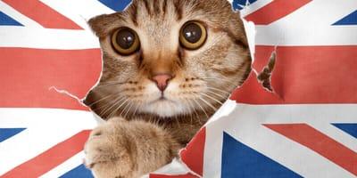 Englische Katzennamen und ihre Bedeutung