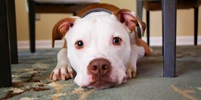 Quali prodotti per cani comprare?