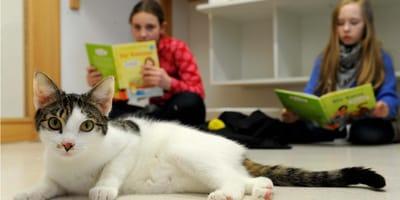 bambini-che-leggono-dei-libri-ai-gatti